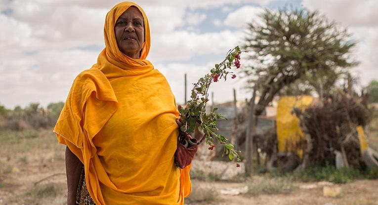 Halleima Omar Ali odottaa kärsivällisesti, että mehiläisyhdyskunnat alkavat tuottaa hunajaa. Hunajakilosta voi saada jopa kaksikymmentä euroa. Kuva: Ville Asikainen