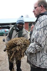 Kimmo Grindilä esittelee säilörehua Liberian ohjelmakoordinaattorille Emmanuel Sandille.