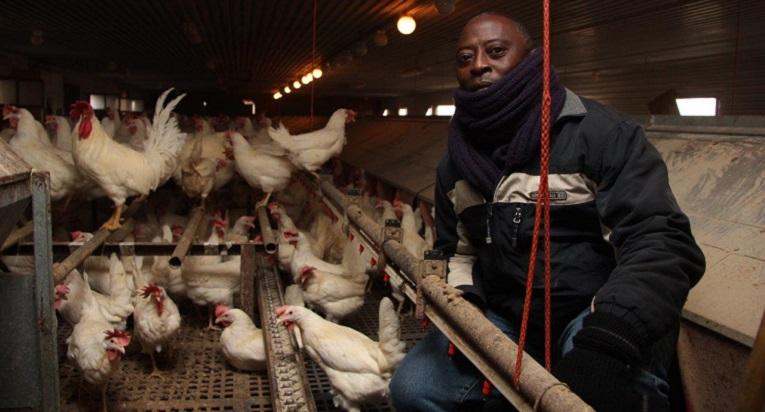Sierra Leonen ohjelmakoordinaattori Joseph Bash-Kamaraa kiinnostaa, mitä kanat saavat syödäkseen Vanhan Grindilän luomukanalassa Porvoossa.