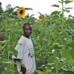 Auringonkukat_yhdistavat_Burundissa