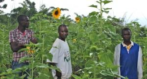 45 nuorta on alkanut viljellä yhteisiä auringonkukkapeltoja Cankuzon maakunnassa Burundissa.