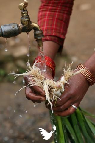 Naisen kädet huuhtovat vihanneksia vesihanan alla Nepalissa. Kuva Hannamari Shakya.