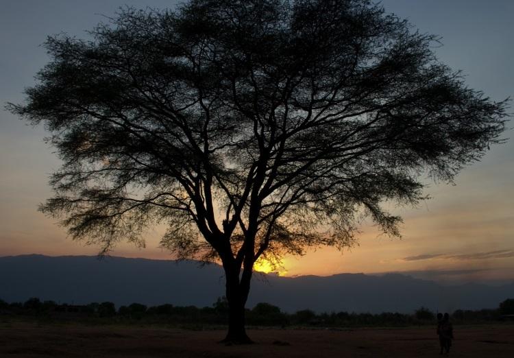 Runsaslehväisten puiden siimeksessä tehdään usein isoja päätöksiä – myös rauhasta. Kuva: Kirkon Ulkomaanapu.