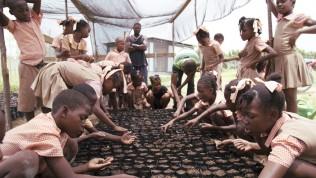 Latinalainen Amerikka ja Haiti: Lapset ikylvävät hedelmäpuun siemeniä Aspamin koulussa.