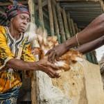 Sundaymai Johnson sai lokakuussa 30 kanaa Project New Outlookilta. Myymällä munat takaisin emokanalaan hän saa käteistuloja, joita tarvitaan esimerkiksi lastenlasten koulupukuihin. Kuva: Ville Palonen