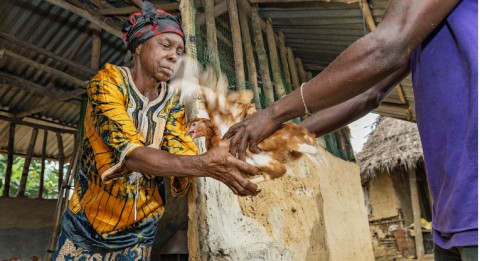 Sundaymai Johnson received 30 chickens from Project New Outlook in October. By selling the eggs back to the poultry farm, she earns cash income needed, for example, for the school uniforms of her grandchildren. Photo: Ville Palonen