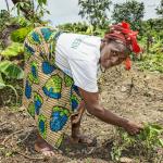 Gaemun äitien kerhon puheenjohtaja Lorpu Sumo on tehnyt peltotöitä seitsemänvuotiaasta saakka. Viidestä lapsestaan hän on pystynyt lähettämään kouluun kaksi poikaa. Nyt tienaamillaan rahoilla hän auttaa 10 lapsenlapsensa koulumaksuissa. Kuva: Ville Palonen.