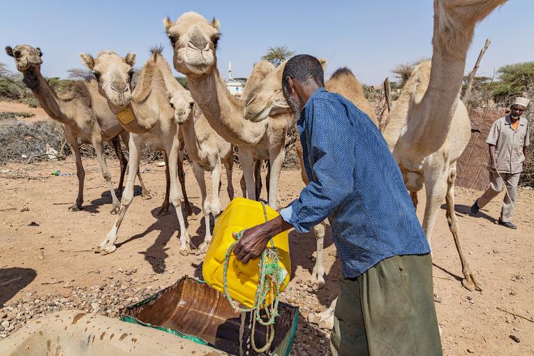 Baha Dhamalain kylässä sadevettä riittää sekä ihmisille että kameleille. Kuvassa Abdi Muse, joka vastaa vesisäiliön ylläpidosta.