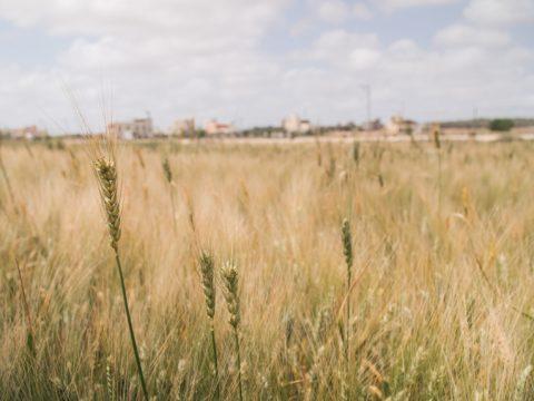 Deir Ballout tunnetaan Salfitin maakunnan vilja-aittana. Kylään johtavan tien molemmin puolin on 1,2 neliökilometriä peltoja.