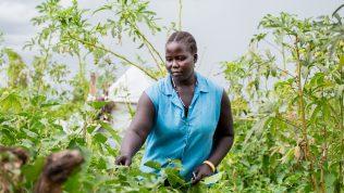 Ugandalainen Muja Rose tutkii viljelmiä.