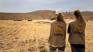 Eappi -ihmisoikeustarkkailija-vapaaehtoisia