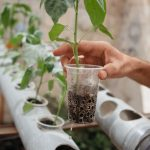 Saplings are growing in plastic mugs planted into plastic tubes.