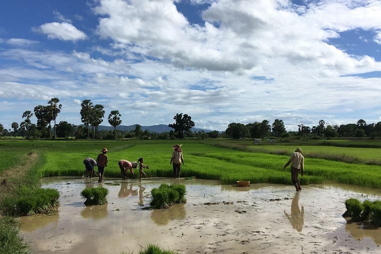 Riisipelto Kampong Speu -provinssissa ja neljä aikuista ja yksi pieni lapsi.