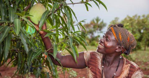 Antolina Ayaa hymyilee puusta kasvavalle isolle sitrushedelmälle.
