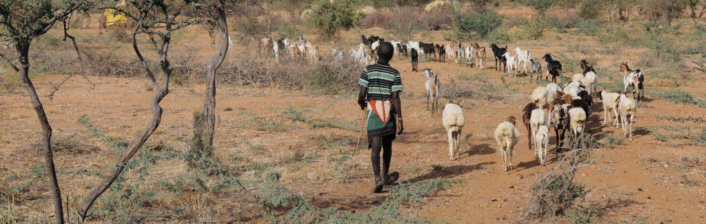 Paimentolaispoika Kenian maaseudulla Turkanassa.