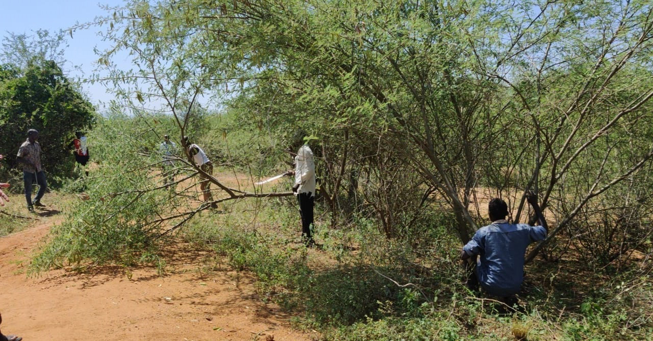Marakwet and Pokot youth clearing the bush along the road connecting the two communities in Northern Kenya.