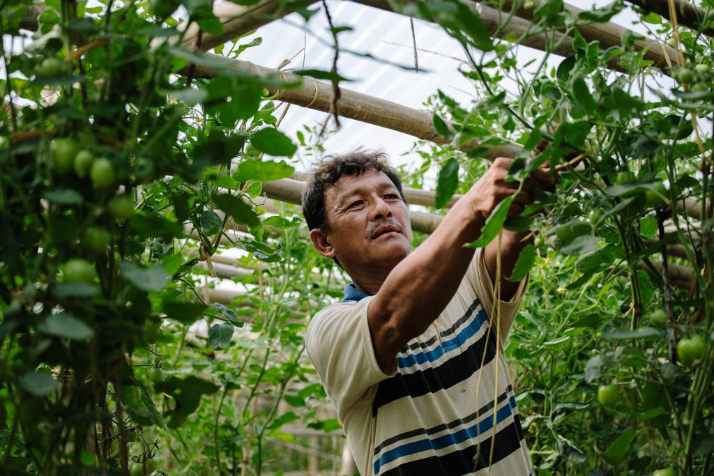 Mies hoitaa kasveja kasvihuoneessaan.